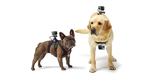 GoPro Fetch - Arnés de cámara GoPro para Mascota, Color Negro ...