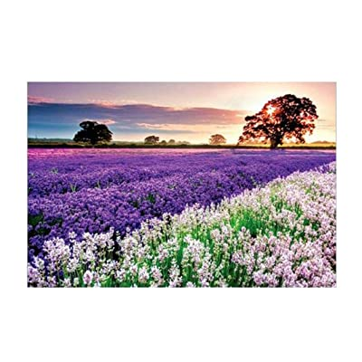 Jigsaw Puzzles 1000 Pieces for Adults,Coohole Lavender Landscape Pattern Assembling Games Kids Educational DIY Toys Great Gift for Home Wall Hanging Decoration,29.5 x 19.6 Inch: Toys & Games