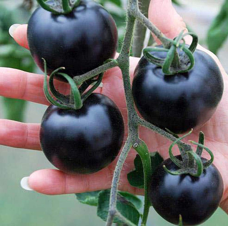 Large Black Cherry Tomato Organic Non-GMO Sweet Fresh Fruit Vegetable Garden Seeds for Planting Tasty Great for Salads Juice Black Tomato 50+Seeds