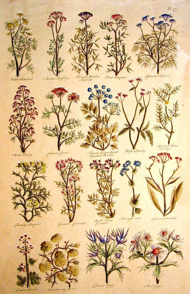 Fiori, Botanica, 1600, Tavola 2 - 42x30 Stampa su carta antica - Stampata e dipinta a mano Florenceprints