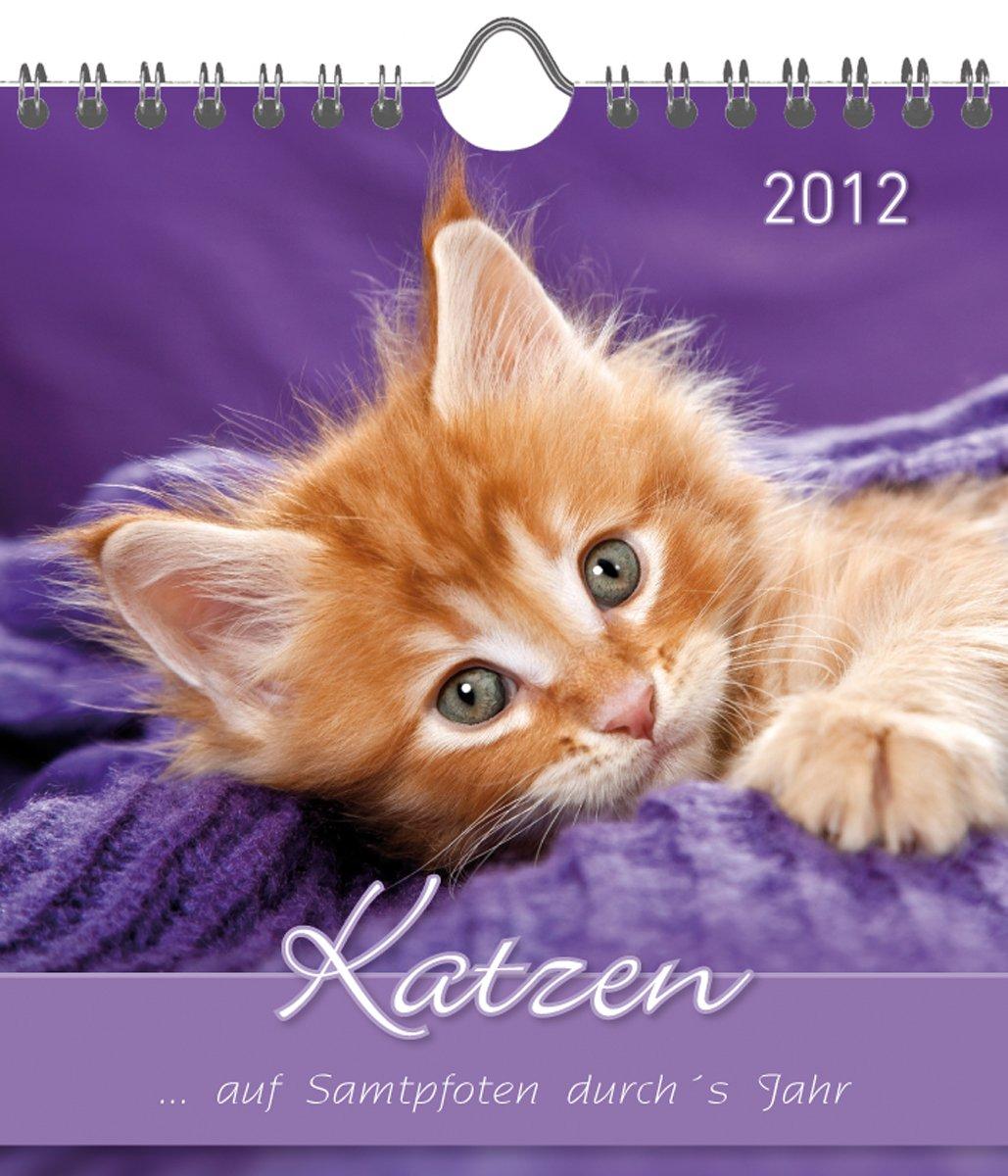 Katzen 2012