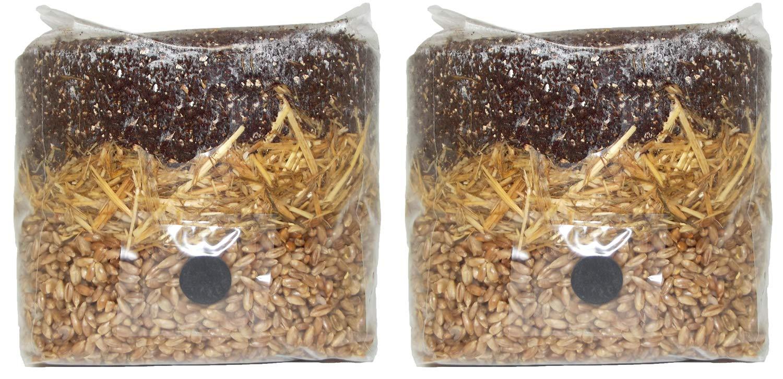 All in One Mushroom Grow Bag (2 Pack)