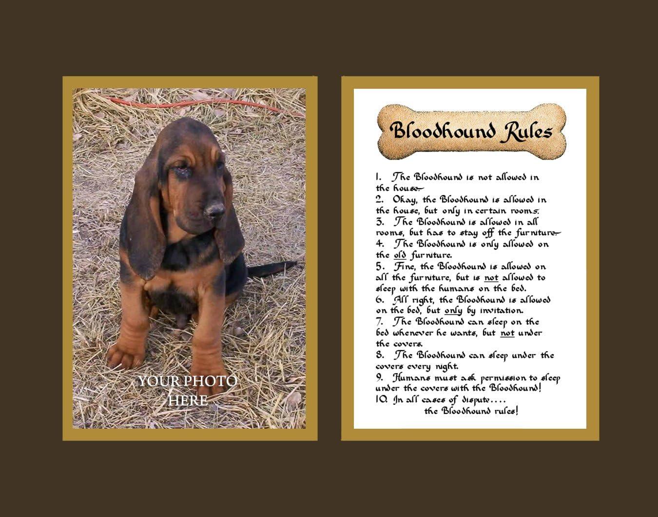 Dog Rules Bloodhound Wall Decor Pet Saying Dog Saying