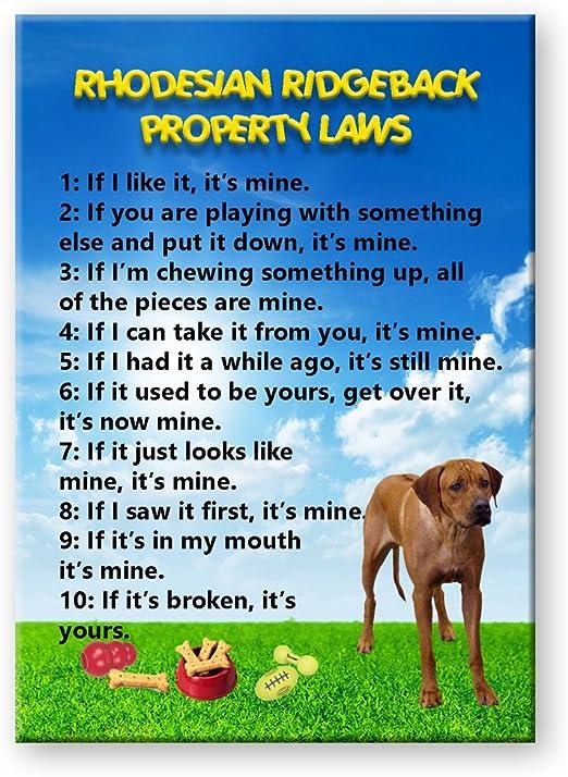 Magnet /& Steel Caution Border Terrier on Patrol Window Decal//Sticker