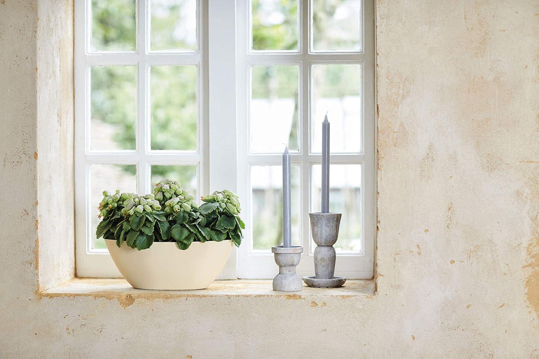 brussels ovale 36cm ivoire 16.2 x 36 x 13.1 cm elho pot de fleurs
