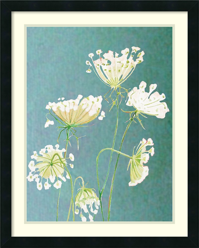 Framed Art Print 'Queen Anne's Lace' by Philip India & Purry