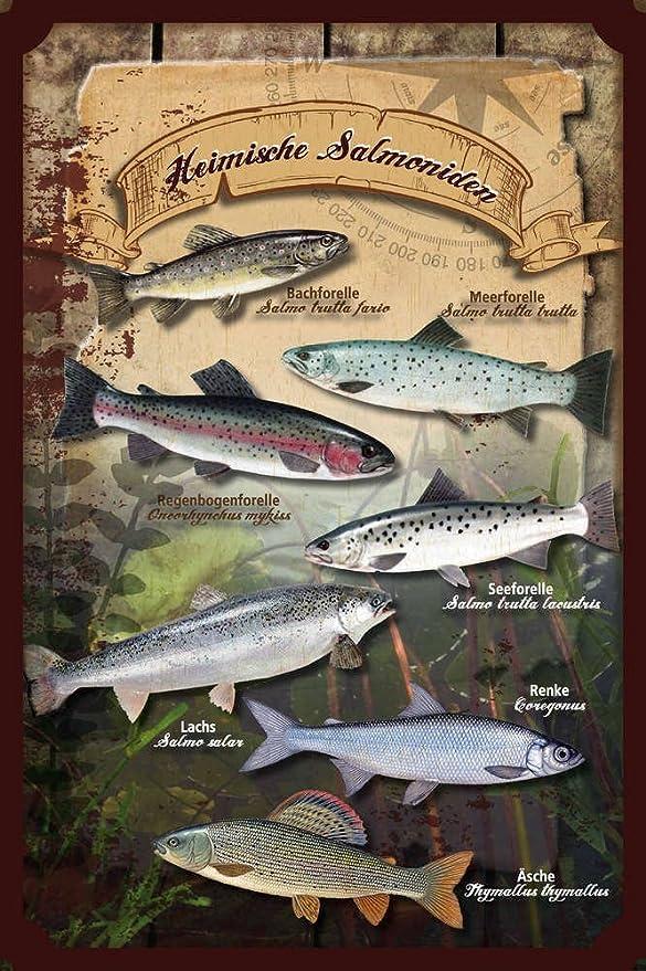 gewölbt Fische Heimische Seefische Blechschild 20 x 30 cm