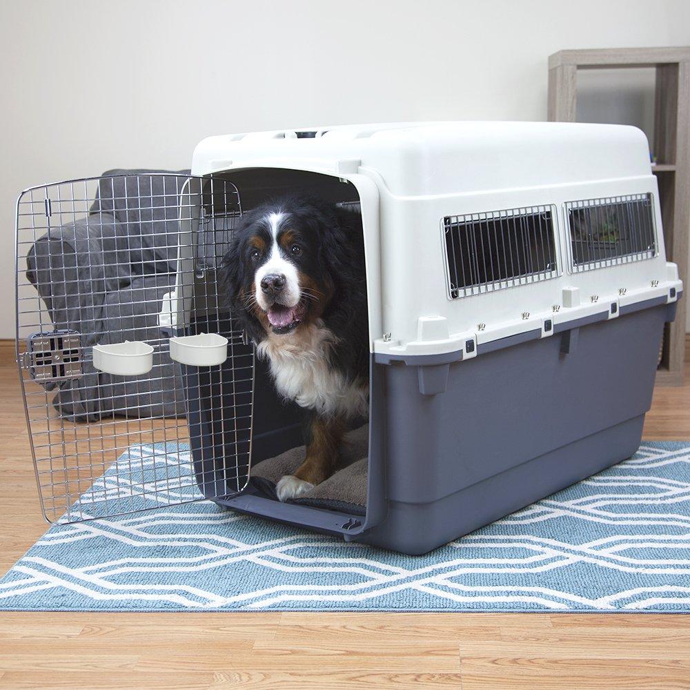 10 consejos para viajar con tu mascota en el avión