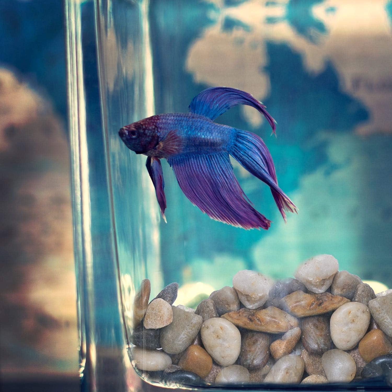 1 Lb bag Polished Pebble River Rocks Aquarium Gravel Small fish tank water 16 oz