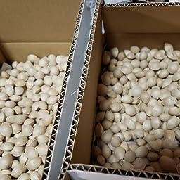 Amazon 信州産 殻付き銀杏 約1kg バラ詰め サイズ大小込み 信州なかの北原農園 銀杏 通販