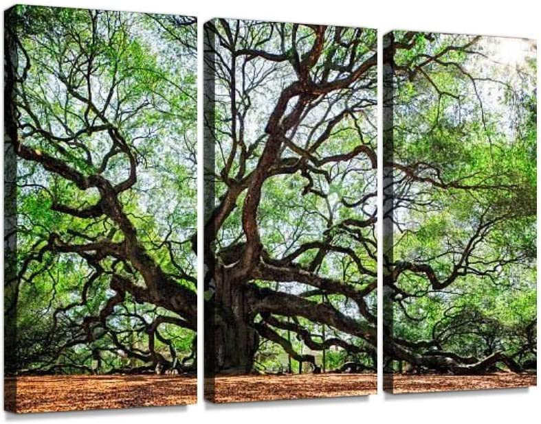 South Carolina Lowcountry Angel Oak Tree Charleston SC Nature Scenic Print On Canvas Wall Artwork Modern Photography Home Decor Unique Pattern Stretched and Framed 3 Piece