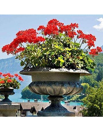 Sunlera 100 piezas/bolso Semillas Semillas de geranio de flores de plantas en maceta casera