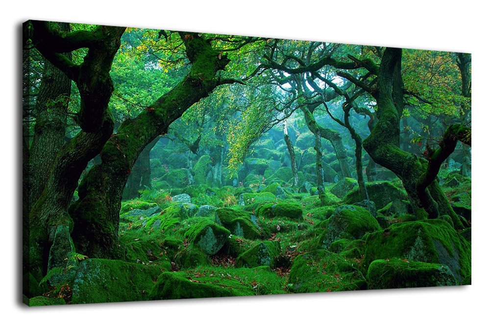 Canvas Wall Art Green Trees Nature Picture Modern Canvas Artwork Large Forests Panoramic Painting Contemporary Big Woods Mossy Rocks Spring Season Prints for Kitchen Office Home Decoration 20'' x 40''
