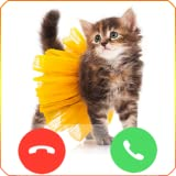 Cat Dress Call
