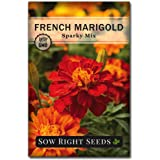 Sow Right Seeds -Sparky Marigold Seeds for Planting, Beautiful to Plant in Your Flower Garden; Non-GMO Heirloom Seeds…