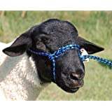 Weaver Leather Livestock Poly Rope Sheep Halter