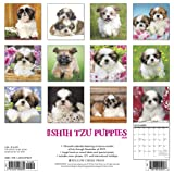 Just Shih Tzu Puppies 2020 Wall Calendar