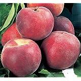 ALBERO DI PESCO -PRUNUS PERSICA-IRIS ROSSO- pianta vera da frutto da esterno