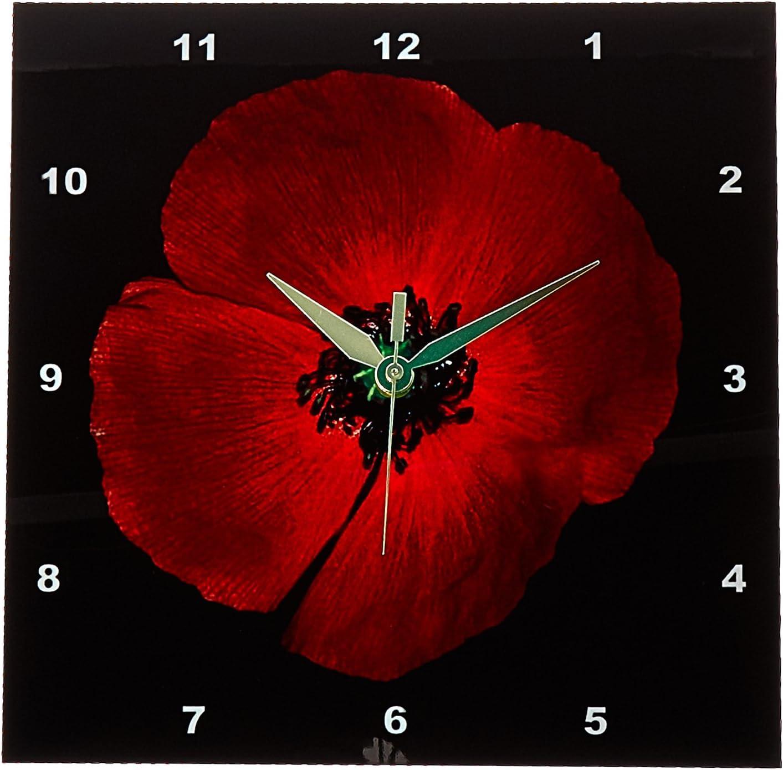 3dRose DPP_18396_1 Orange Wildflower Black Background Wall Clock, 10 by 10-Inch