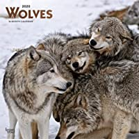 Wolves 2020 Square Wall Calendar