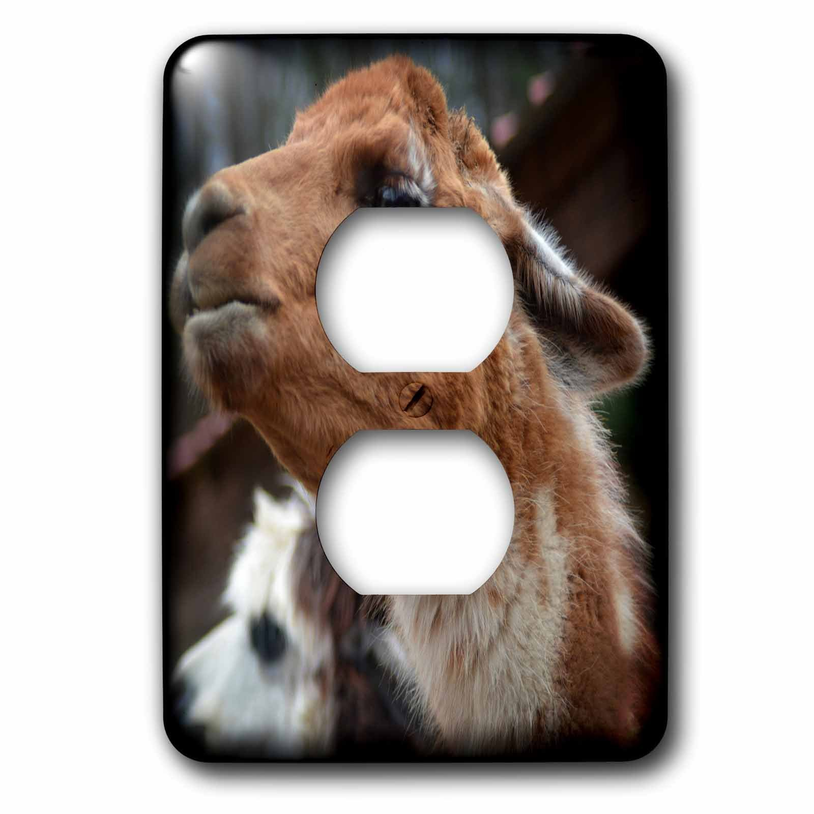3dRose WhiteOaks Photography and Artwork - Lamas - Yes More Please is a lama wanting to be fed more food - Light Switch Covers - 2 plug outlet cover (lsp_265349_6)