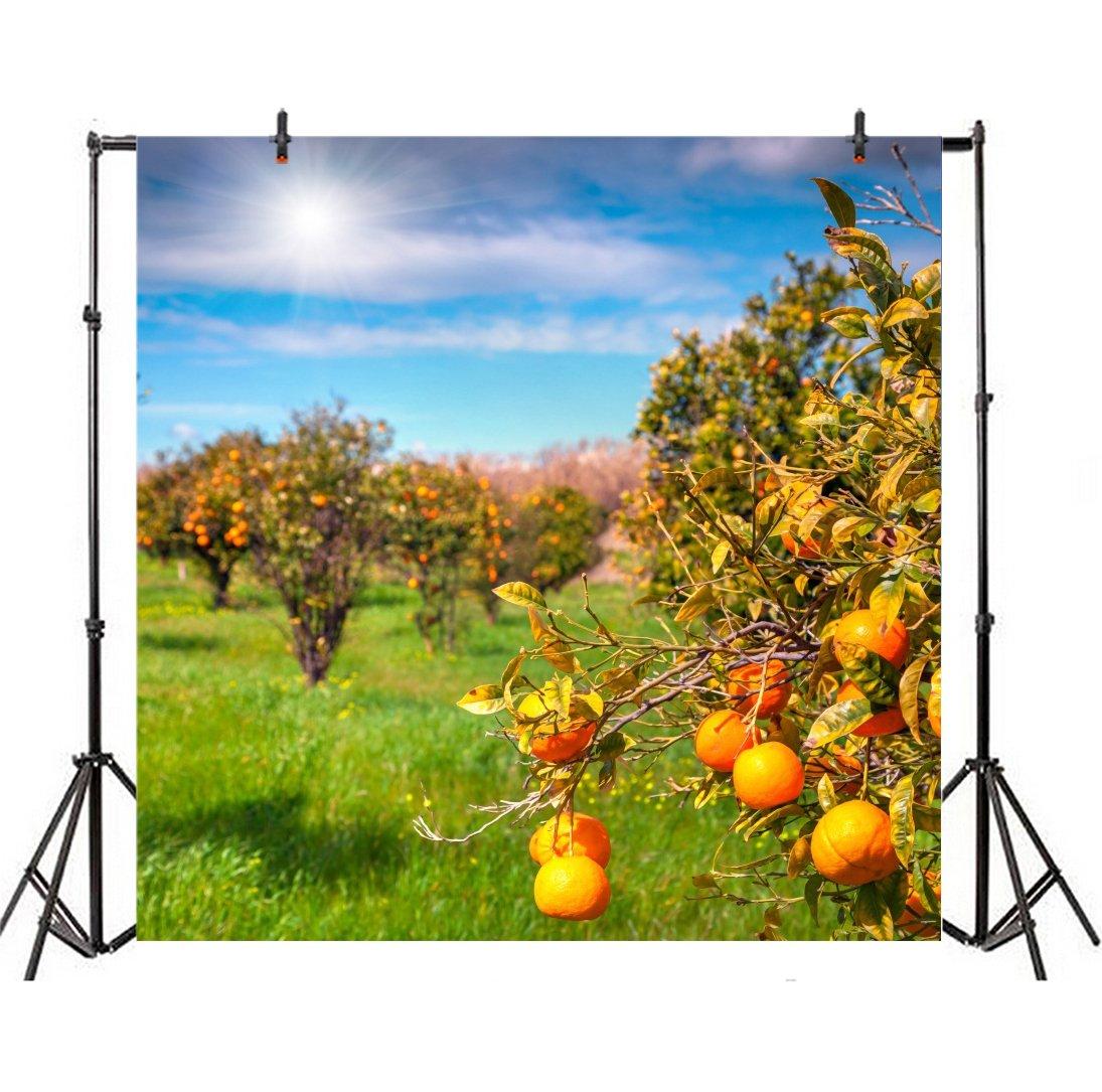 leyiyi 6 x 6ft写真BackgroudオレンジPlantation Backdrop Agriculture Fruitful Garden Bokeh Harvest秋Fresh Fruit Pick Marigold Blossom Happy誕生日フォトPortraitビニールStudioビデオProp   B07FTJKNC1