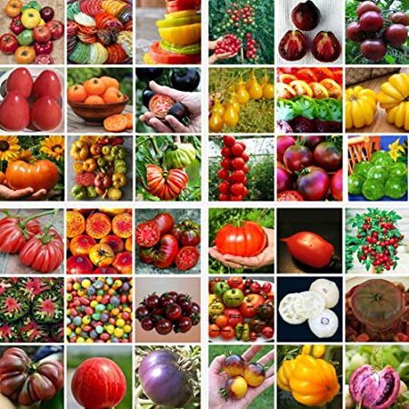 100 pcs vegetable Seeds Strawberry Tomato Delicious fruit