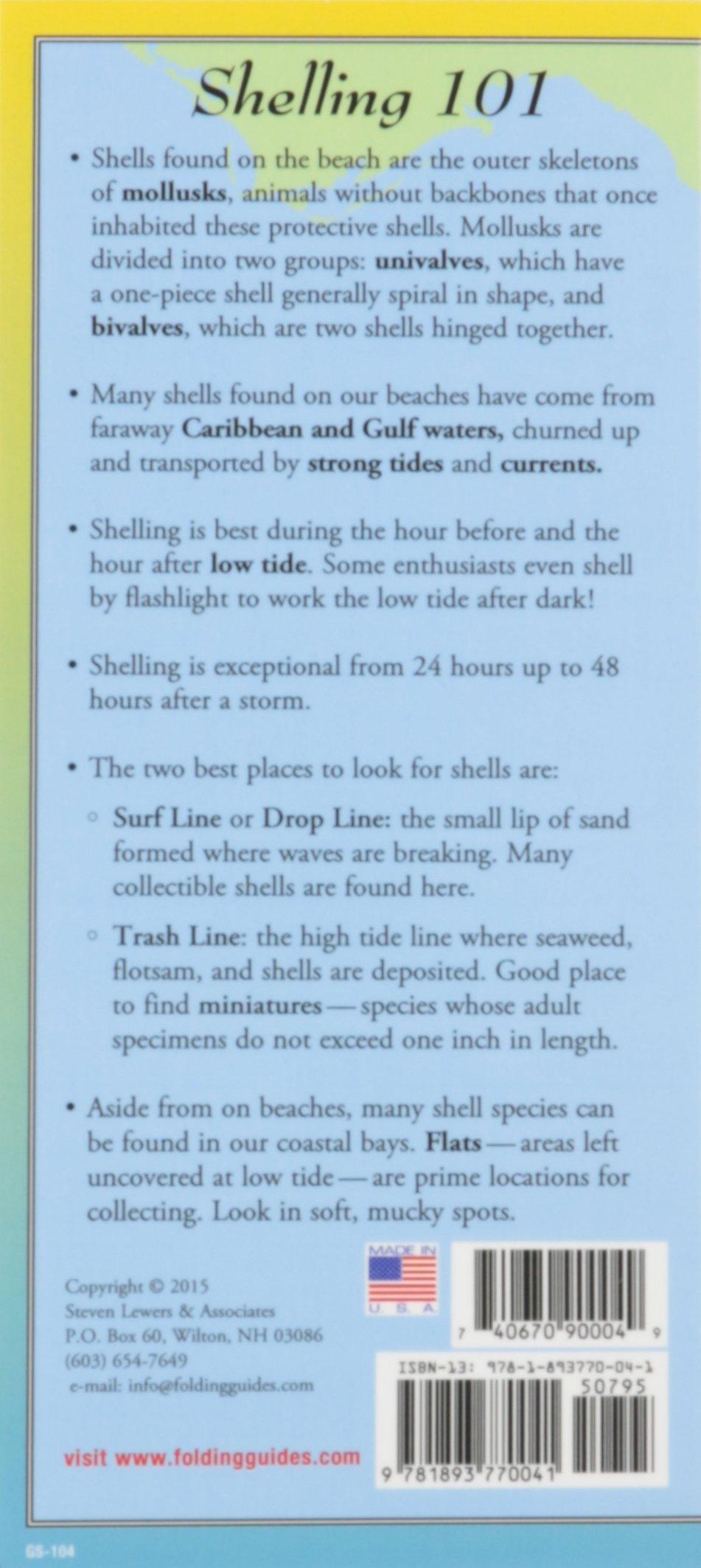 Shells of floridas gulf coast folding guide foldingguides shells of floridas gulf coast folding guide foldingguides jackie douglass 9781893770041 amazon books nvjuhfo Image collections