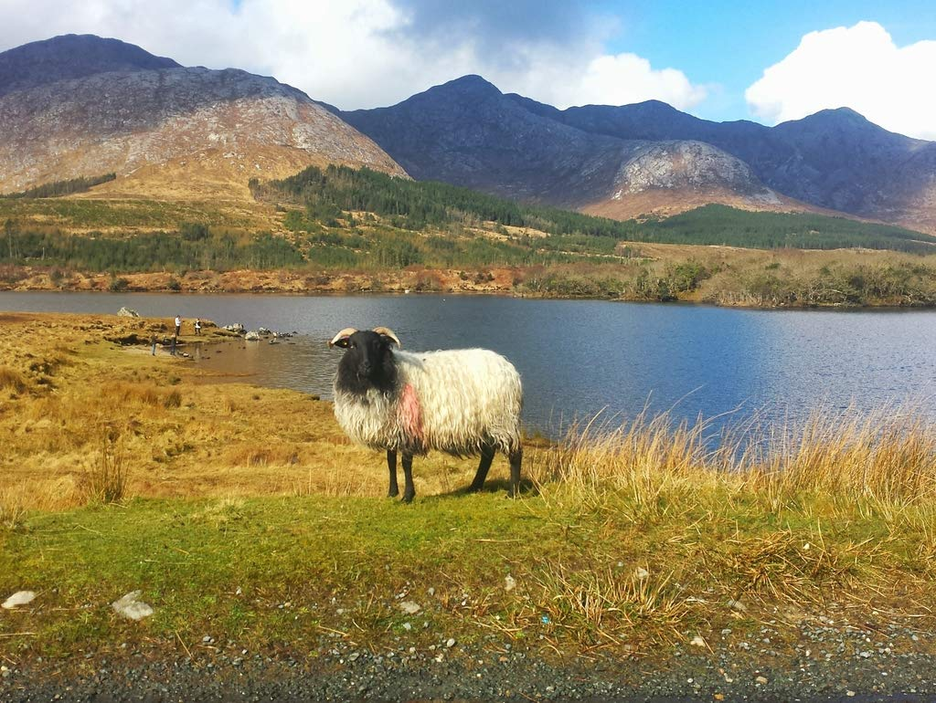 Lais Jigsaw Ireland Connemara sheep coast 2000 pieces