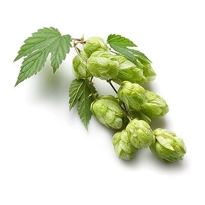 Common Hops 1/4oz seeds Humulus Lupulus brewing vine hop beer : Garden & Outdoor