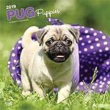 Pug Puppies 2019 Calendar
