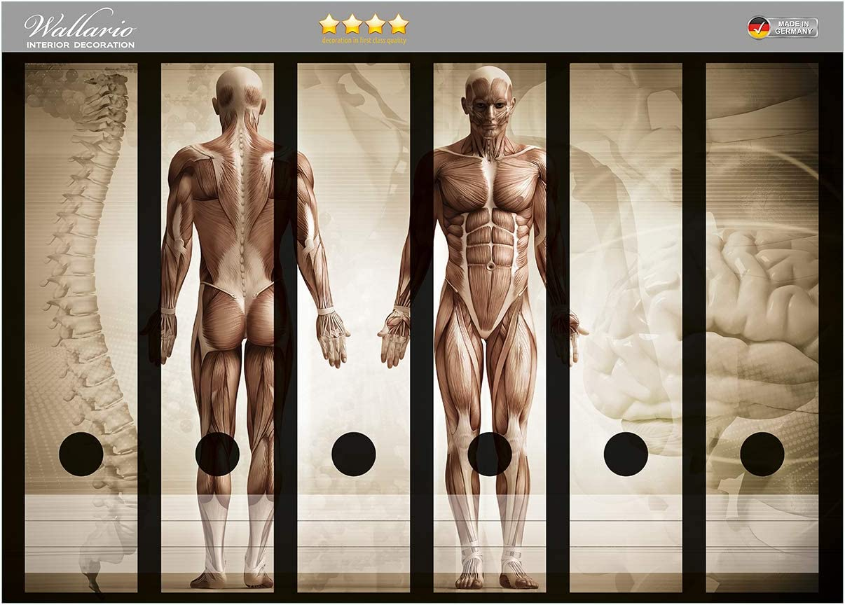 Gr/ö/ße 36 x 30 cm passend f/ür 6 breite Ordnerr/ücken Wallario Ordnerr/ücken Sticker Anatomie Mensch I in Premiumqualit/ät
