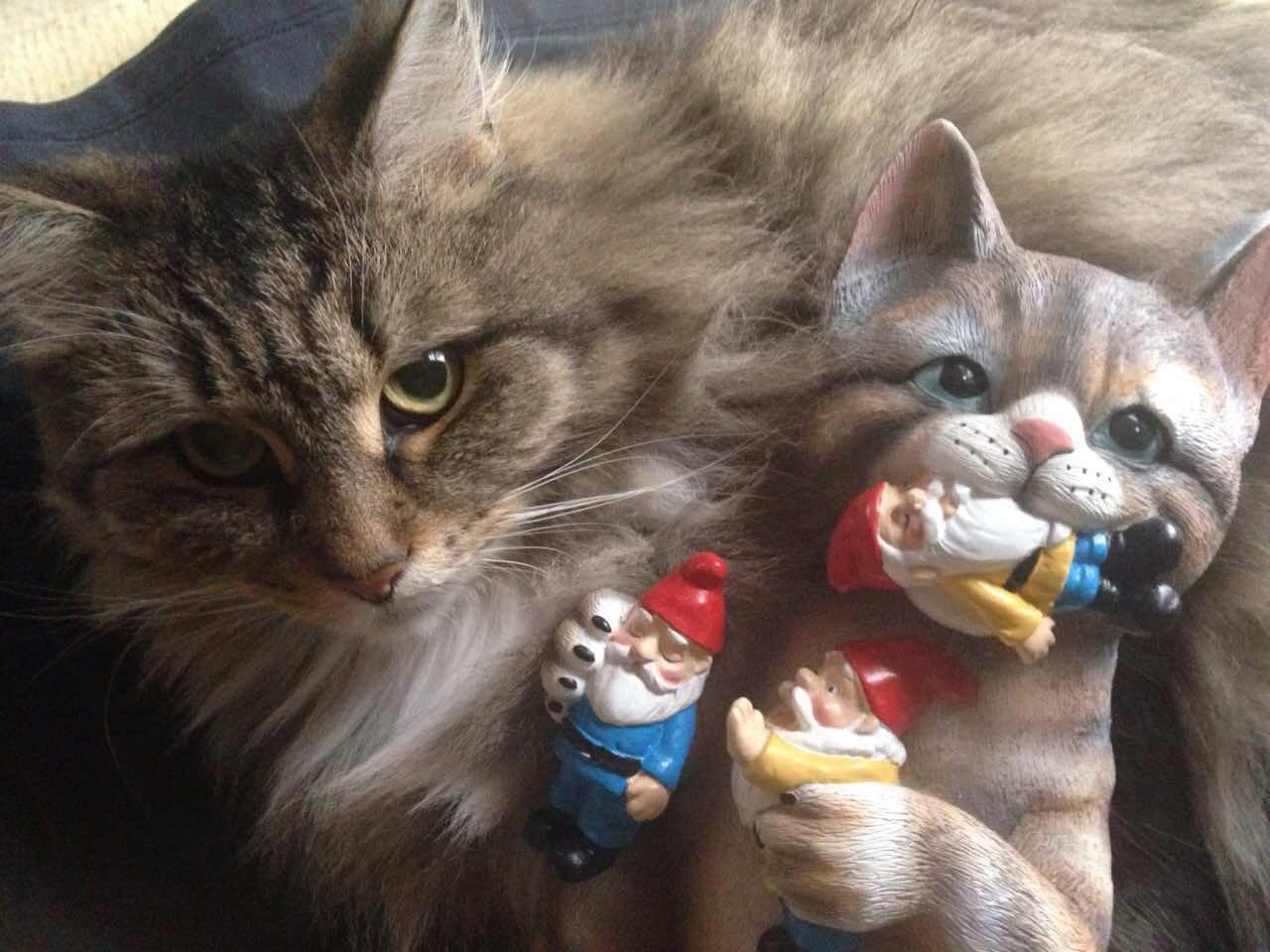 mischievous cat yard gnome