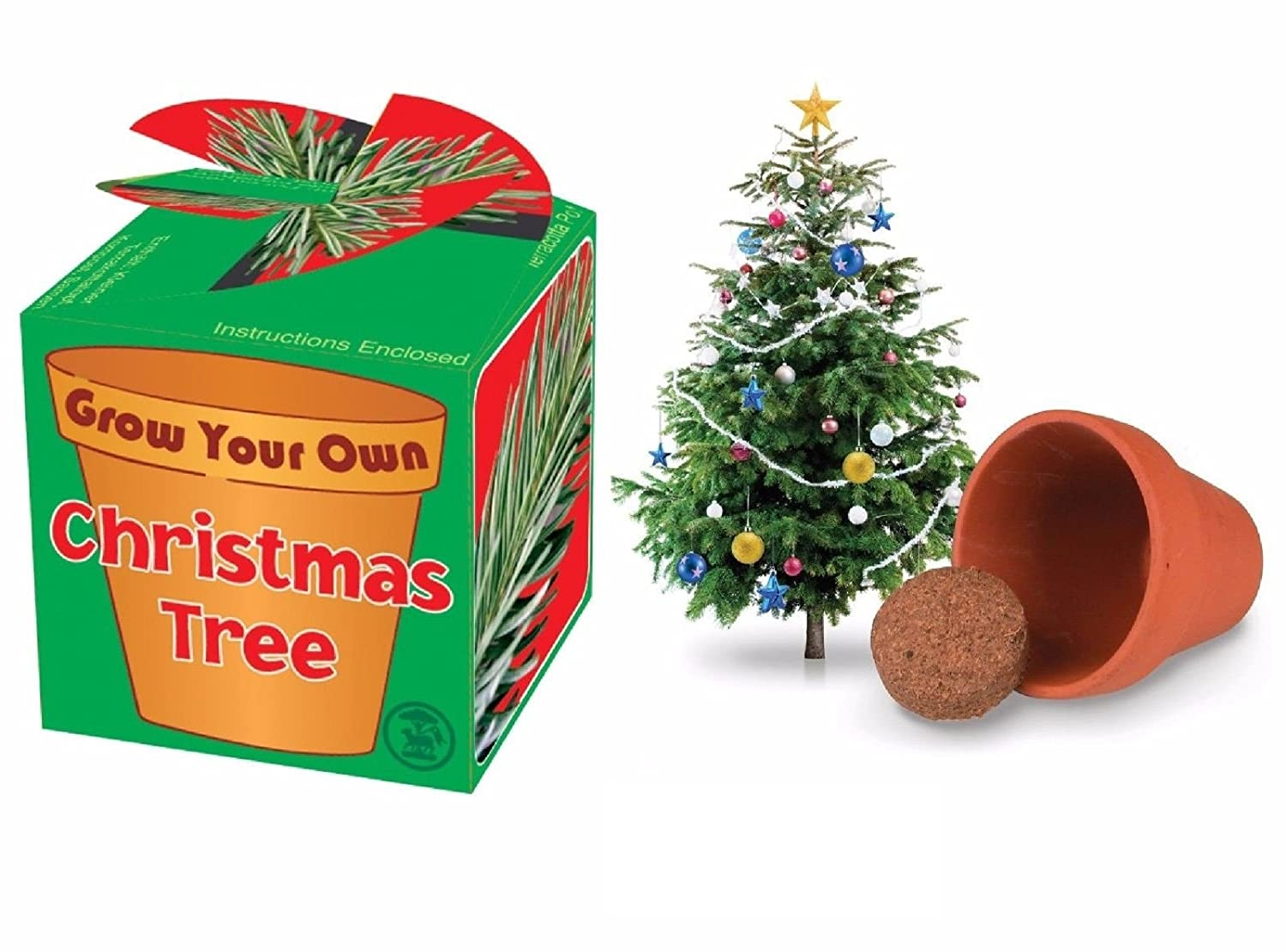 GROW YOUR OWN CHRISTMAS TREE KIT Kids Child Stocking Filler Plant Pot Box Gift by Lizzy® Tobar