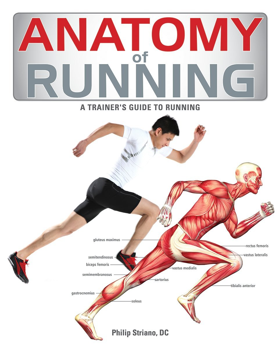 Anatomy of Running: A Trainer\'s Guide to Running: Philip Striano DC ...