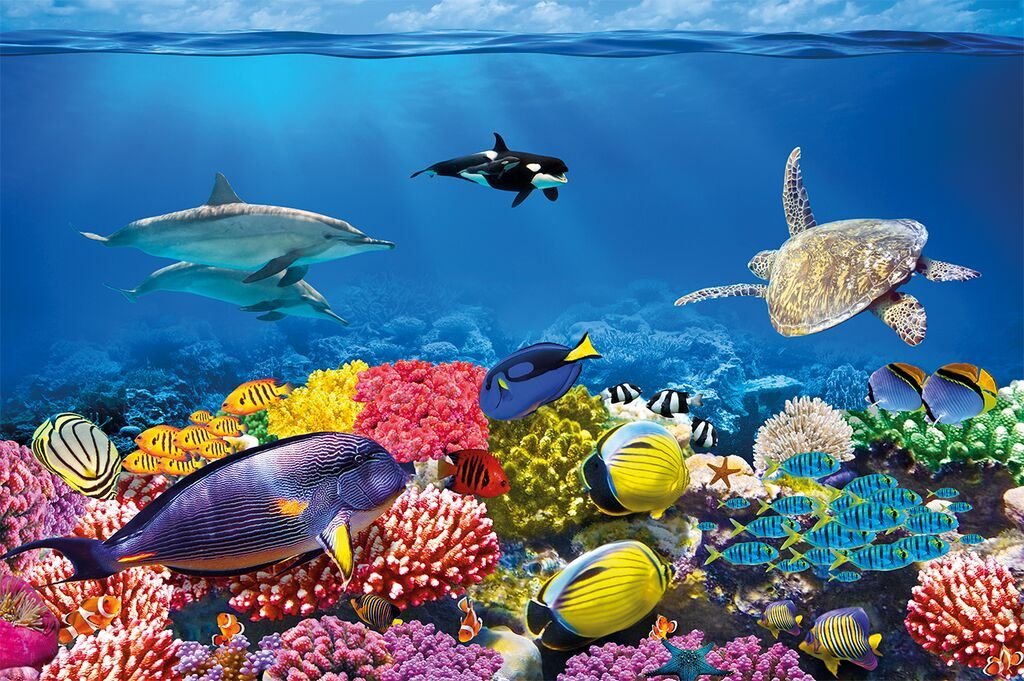 GREAT ART Wall Decoration Undersea Coral Reef Photo Wallpaper - Colourful Underwater World Poster - Mural Aquarium Motiv XXL Wallpaper (55 Inch x 39.4)