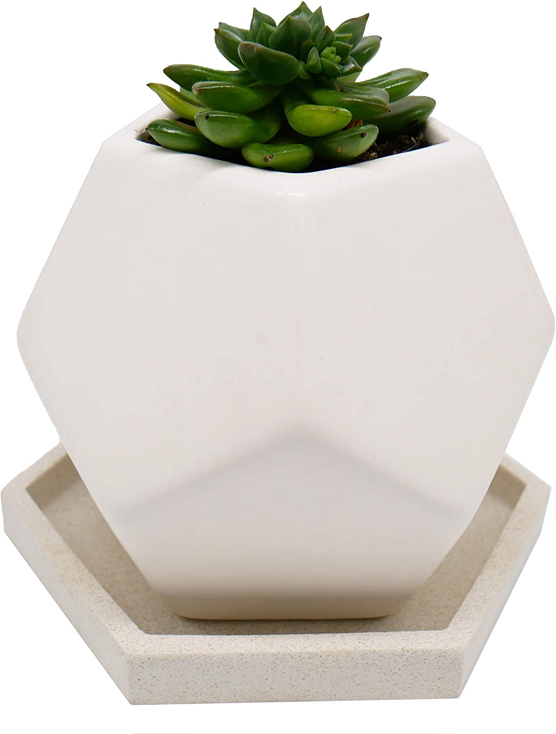 Planter Saucer for Indoor and Outdoor Plants HEXII Hexagon Plant Tray 2 Pack 6 inch