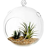 Decent Glass Hanging Glass Globe Plant Terrariums - Glass Orbs Air Plants Tea Light Candle Holders Succulents Moss Miniature Garden Planters Home Decor Indoor Garden