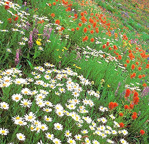 Partial Shade Perennial Flowers - Western Wildflower Seed Mix - Annuals and Perennials, Sun and Partial Shade
