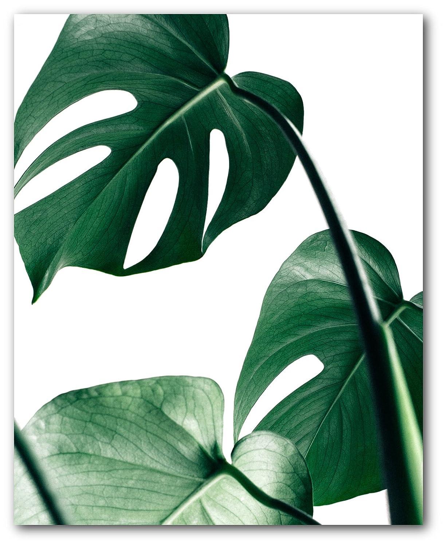 Amazon Com Monstera Leaf Print Palm Leaves 8 X 10 Inches Wall Art Unframed Handmade A monstera leaf art print, the perfect simple jungle illustration for your gallery wall. monstera leaf print palm leaves 8 x 10 inches wall art unframed