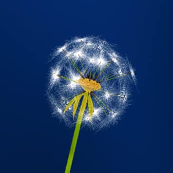 Amazoncom Dandelion Wonder Live Wallpaper Appstore For Android