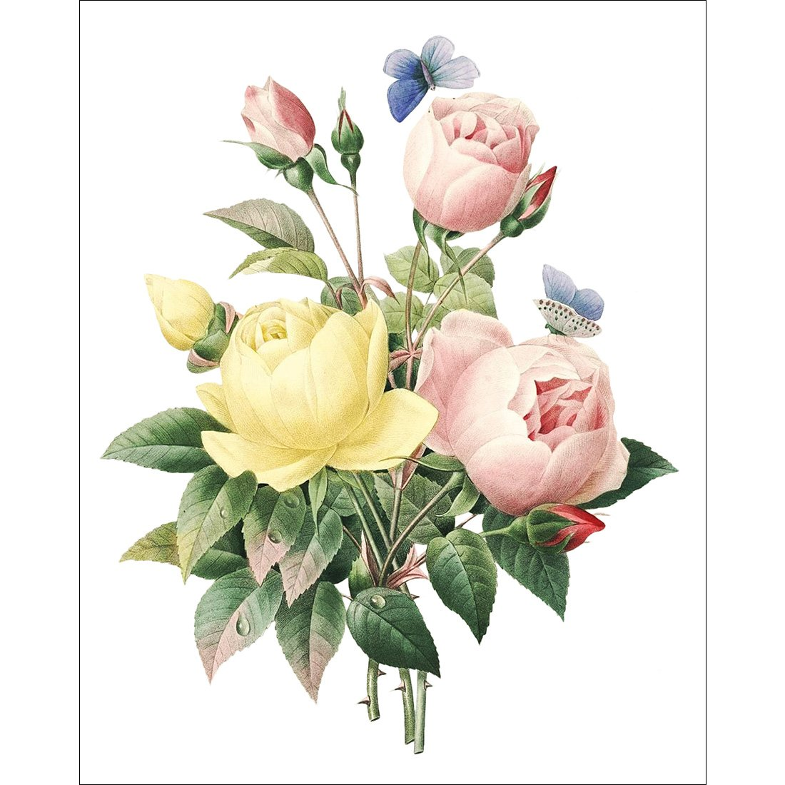 Meishe Art Vintage Poster Print Blooming Flowers Botanical Floral Green Plant Illustrations Colorful Rose Fashion Home Wall Decor Set of 6pcs