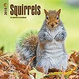 Squirrels 2018 Calendar