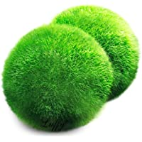 2 Luffy Giant Marimo Moss Balls - Bring Home Japan's National Treasure - Use it as Aquarium Decor or a Perfect Heirloom Gift - Symbolize Eternal Love - Eco-Friendly, Good Luck Charm