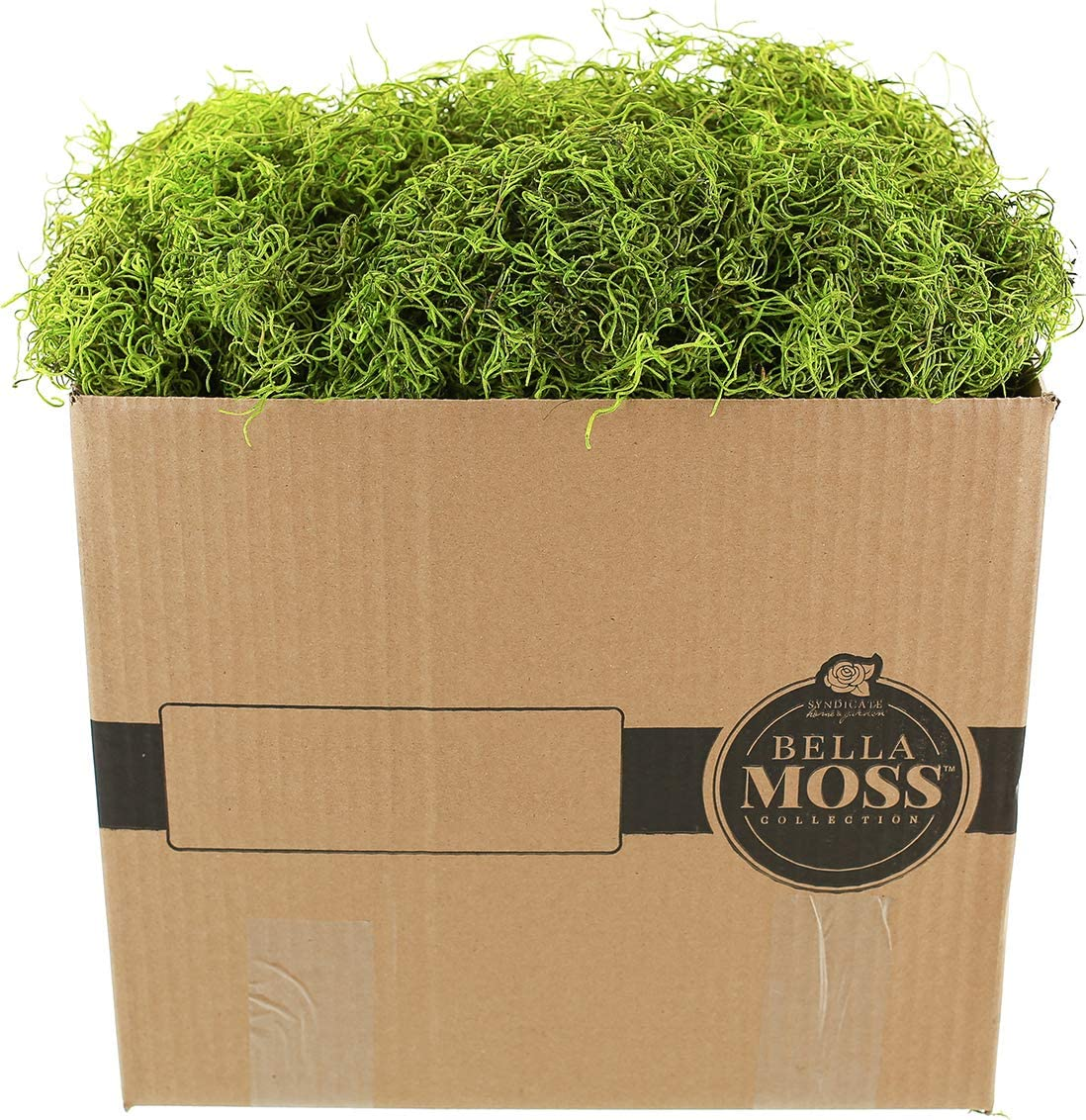 Fresh Green Renewed SuperMoss 3lbs Forest Moss Preserved 25325