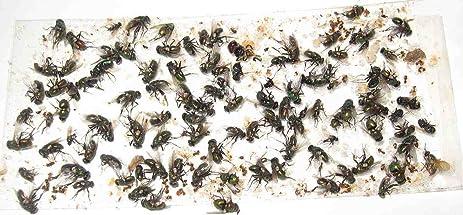 200 Pk ALL Insect Fly Traps Sticky Strips Glue BoardsTwenty