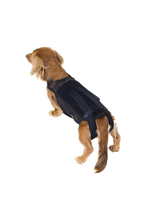 perro médica andador corsé y pequeños perros en ...