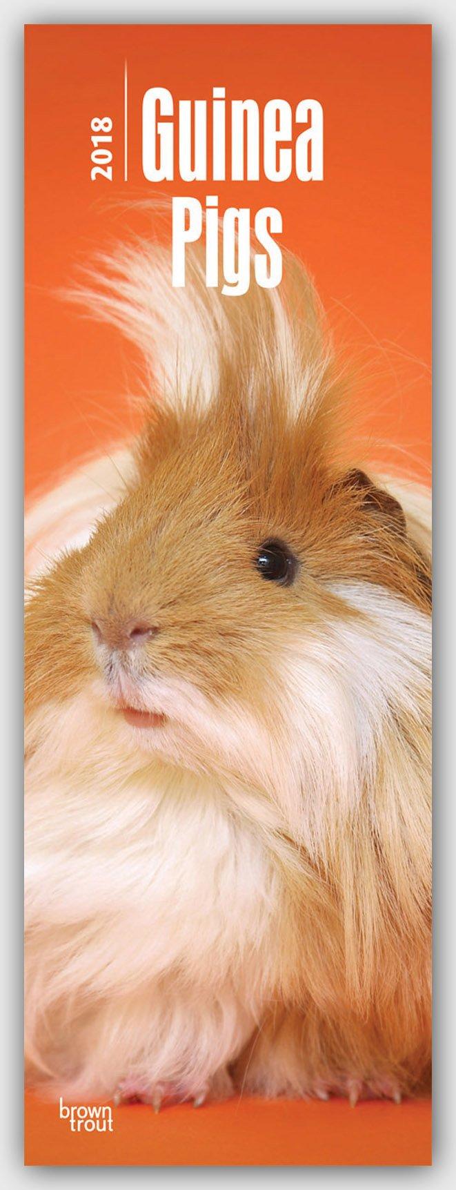 Guinea Pigs – Meerschweinchen 2018: Original BrownTrout-Kalender - Slimeline [Mehrsprachig] [Kalender] (Slimline-Kalender)