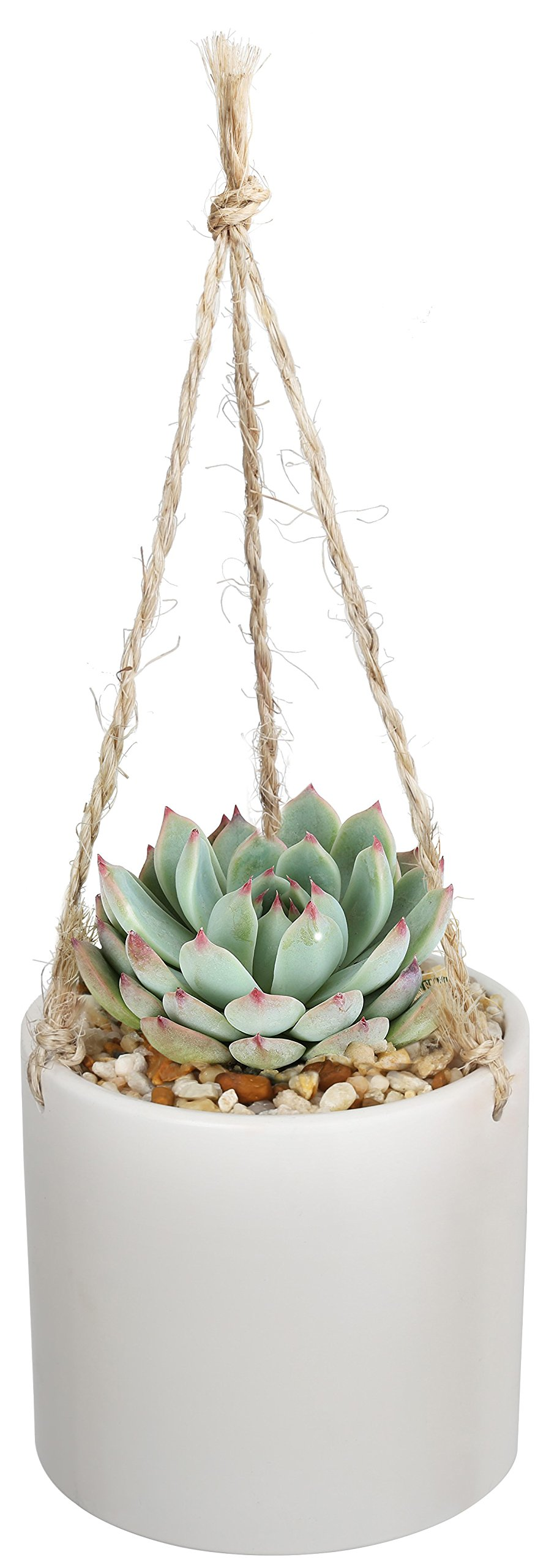 Costa Farms Live Succulent Echeveria Plant in Boho Inspired 4-Inch Ceramic Hanging Basket, Great Gift