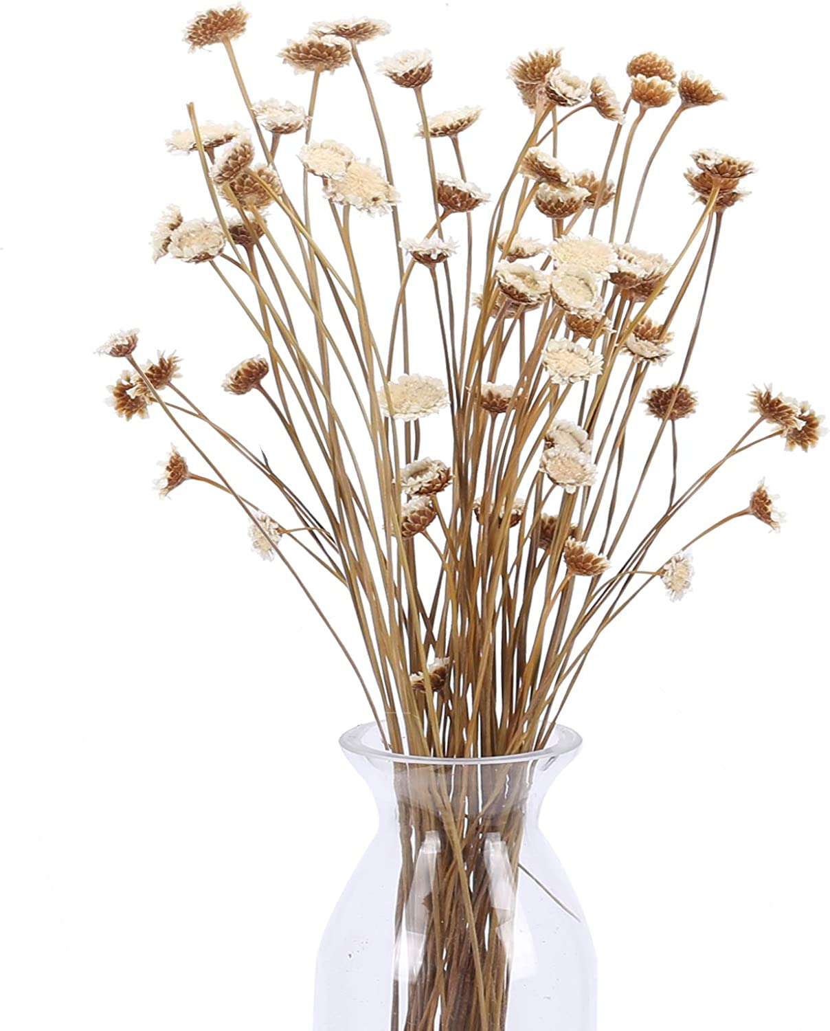 XHXSTORE 60Pcs Dried Flowers Natural Dried Flowers Bouquet Artificial White Daisy Bouquet Fake Floral Arrangements for Wedding Home Office Party Hotel Restaurant Winter Decoration White